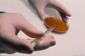 邻苯二甲酸酯(Phthalates)测试